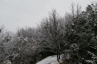 自宅周辺の雪景色