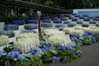 会場を埋め尽くす色とりどりの花々