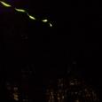 ゲンジホタルとヒメホタルの光跡(『備中鐘乳穴』駐車場周辺)